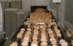 Raccolta uova in Masseria